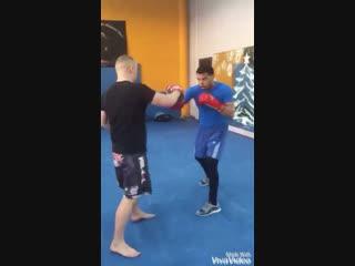 Работа с кубинскими боксерами