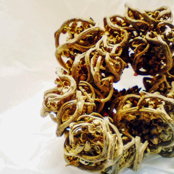 ИЕРИХОНСКАЯ РОЗА Иерихонской розой (Anastatica hierochuntica), или анастатикой называется небольшое однолетнее травянистое растение из семейства Капустные или Крестоцветные, к которому относятся