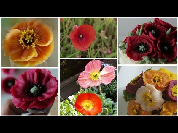앙금플라워 양귀비 꽃짜기 모음 Poppy flower piping techniques tutorial