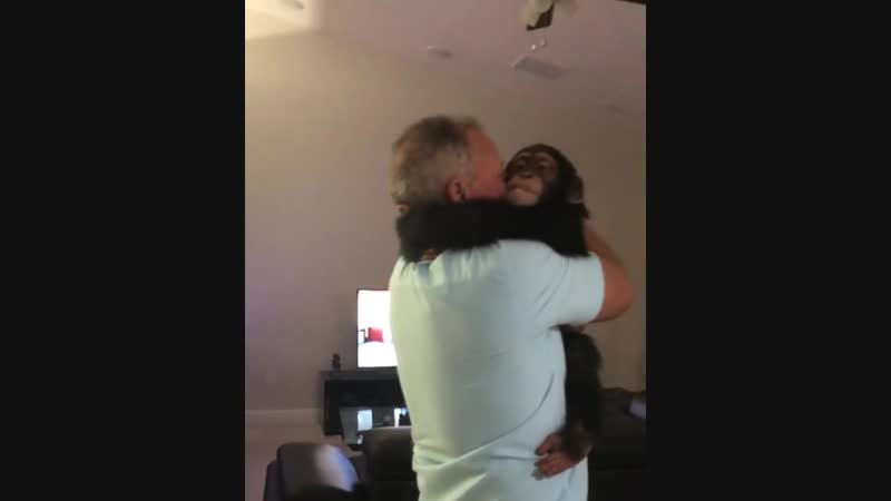 A chimpanzee living at a zoo in Miami was reunited with his former foster parents
