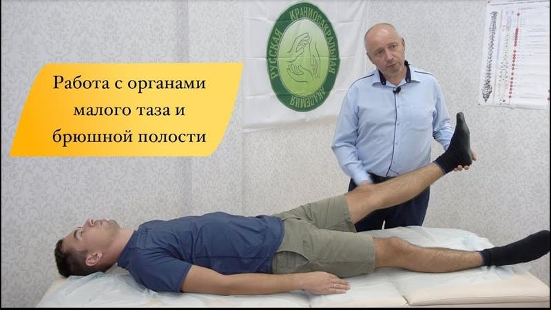 Работа с органами малого таза и брюшной полости