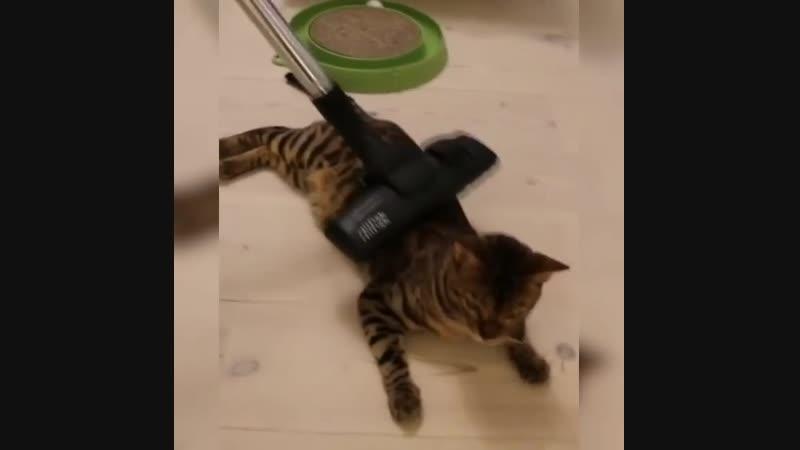 Ну очень пыльный кот Ещё постирать и высушить