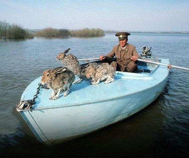 """""""Егерь плывёт со спасенными зайцами во время наводнения"""".... Деда Мазая помните"""