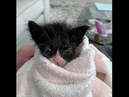 Kitten found abandoned in park, beats the odds