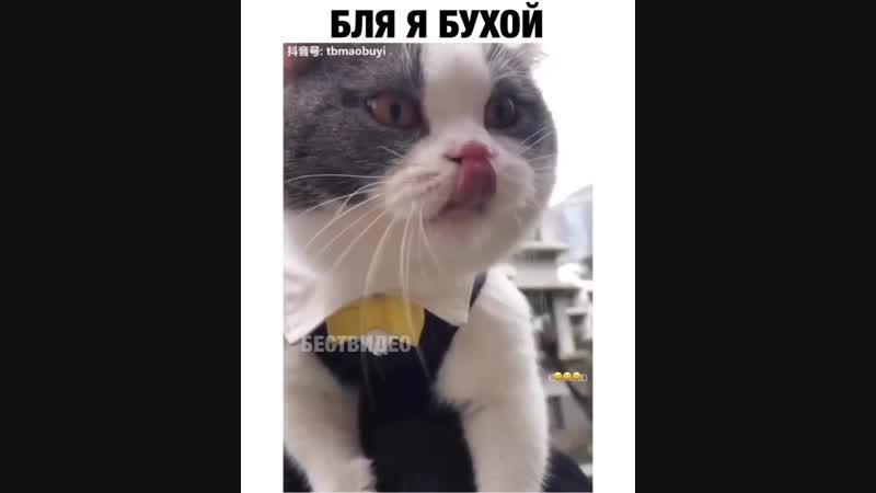Это настоящий,кот говорящий...😂