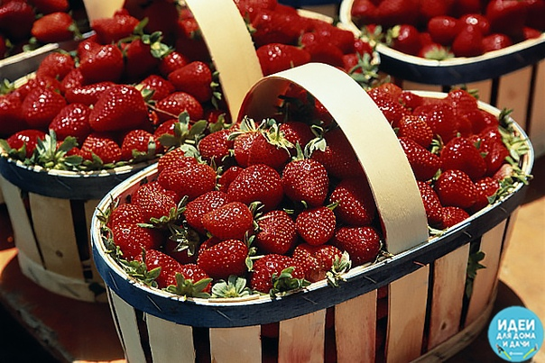 Мой сосед по даче жалуется, что не успевает собирать ягоды - их так много. Говорит, что секрет в этой подкормке. Может кого то заинтересует, попробуйте. Состав: 1 стакан золы залить 1-2 литрами