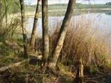 Пеший поход. Ушачшские озёра 2008. Музыка авторская.