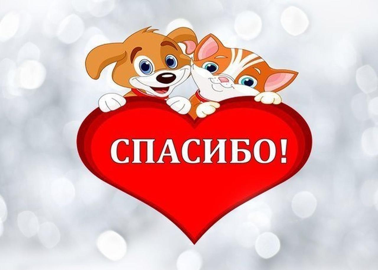 Картинка спасибо с собакой, открыток своими руками