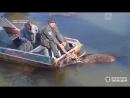 В Чернобыле спасли тонувшего лося