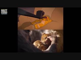 Сравнение Короля Льва 1994 года и 2019