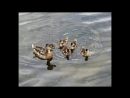 Птицы от весны до осени от грачи прилетели до грачи улетели музыка Jon Lord
