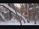 Самара место в котором я живу- лыжные походы дятел на кормушке!