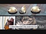 Морские котики [4 серия,