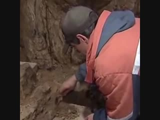 Новости палеонтологии