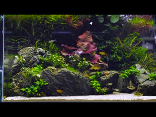 Beautiful aquascape with 360 view - 1 year old - 4k cinematic by green aqua