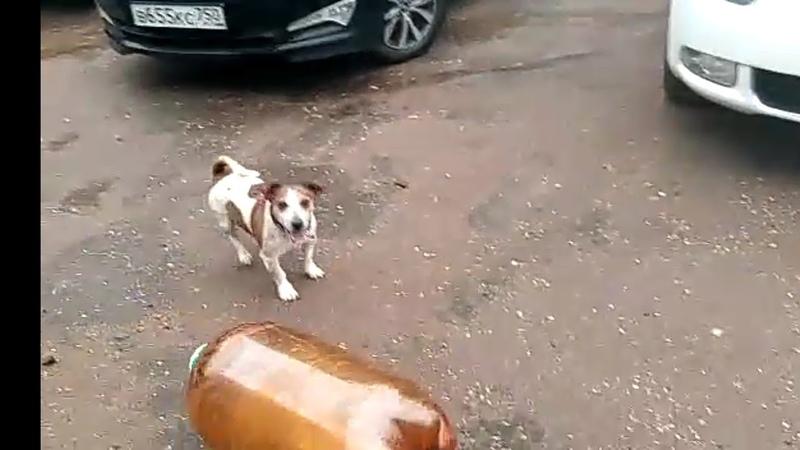 Собачка и пивная кега