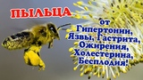 Пыльца пчелиная. Чем полезна, как принимать и свойства. Гипертония, холестерин, простатит