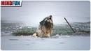 Als Spaziergänger diesen heulenden Hund sahen, reagierten sie genau richtig!
