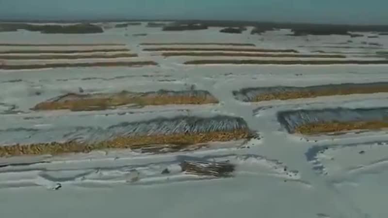 Первомайский район Томской области. Работа китайских лесорубов. -