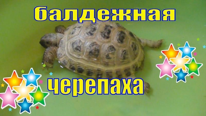 Черепаха Вафелька полюбила купаться