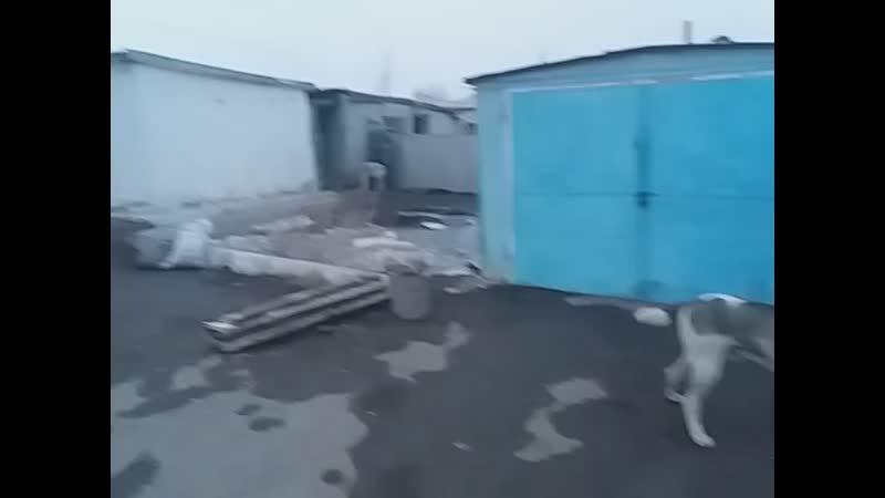 Дауыл - Алапар