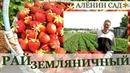 Экскурсия на земляничную ферму в Латвии / Валдис Пулиньш
