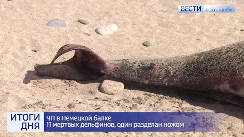 Итоги вторника Вести Севастополь
