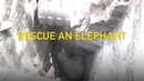 Elephant rescued from deep well in Sri Lanka