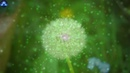 Activate Your Wish Chakra To Make Your Wish Come True Meditation Music