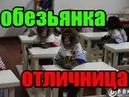 Игровой автомат crazy monkey/Как умножить свой депозит в 19 РАЗ Школа казино вулкан от Леха лудовод