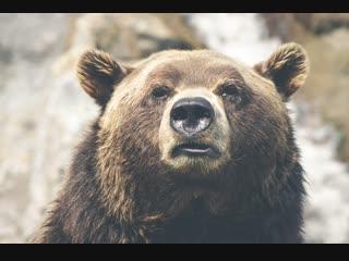 Медведь, еще не самое страшное кого вы можете повстречать в лесу...