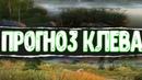 Русская Рыбалка 4●ПРОГНОЗ КЛЕВА●РОЗЫГРЫШ FALCON TL 800 MAX НА 22 КГ●