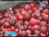 Дикая Сибирь В Иркутске создали мануфактуру по переработке таёжных ягод