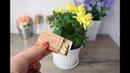 Как навсегда избавиться от мошек на цветах