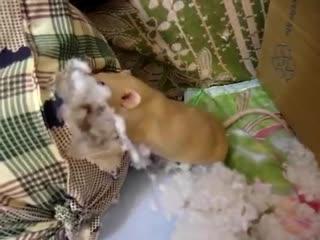 2016-05-18 _Жива и подушка-любимая игрушка (муз)