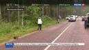 Новости на Россия 24 • Сбежавшие зубры из Подмосковья могли стать жертвами браконьеров