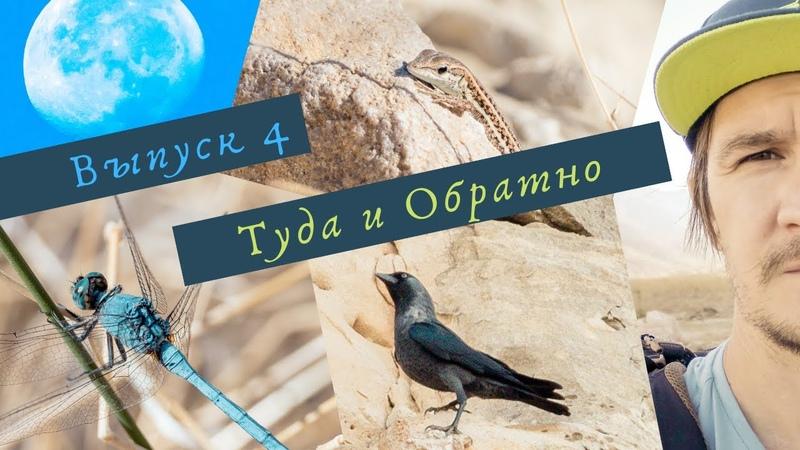 Снимаю галок, азиатских кекликов, синиц и других птиц о. Кипр. [ТиО-4]