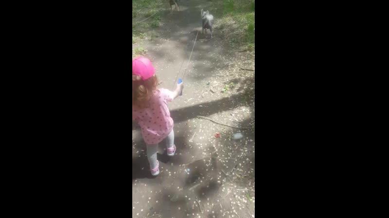 Яна гуляет с Террой