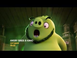 «angry birds в кино» сегодня на стс