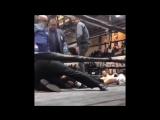 Защищай себя всё время, бэйби! Real Deal Boxing Showcase Series.