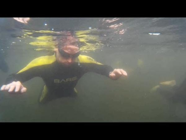 КТО обитает во Флориде!? Ламантины! Snorkeling with Manatees