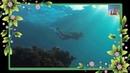 Nàng Xinh Đẹp Biển Càng Thêm Đẹp | Nude Beach