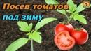 Уникальный способ выращивания ТОМАТОВ БЕЗ РАССАДЫ Сеем ТОМАТЫ ПОД ЗИМУ без заморочек ДАЧНЫЕ СОВЕТЫ