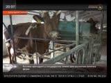 В Тихорецком районе казаки объединились для освоения земли