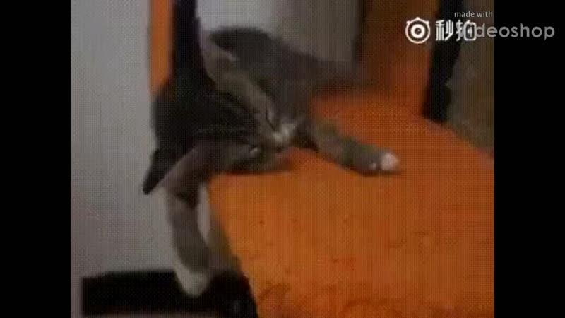 кот бухой mp4