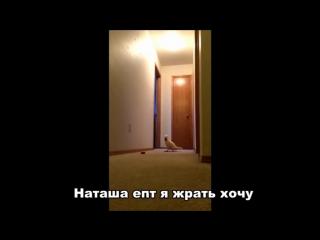 Попугай кричит Наташа и бегает по квартире
