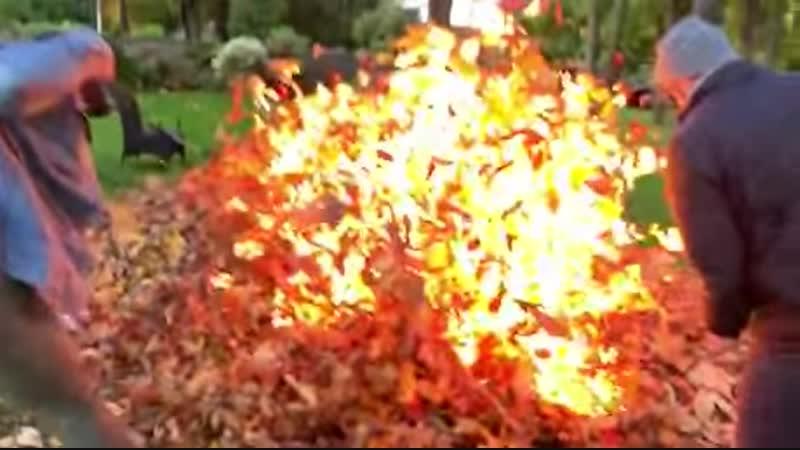 Листья горят!
