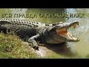 Nat Geo Wild: Вся правда о крокодилах