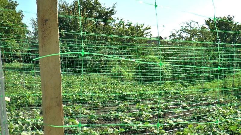 огуречная сетка капельный полив для огурцов мульча огурцам
