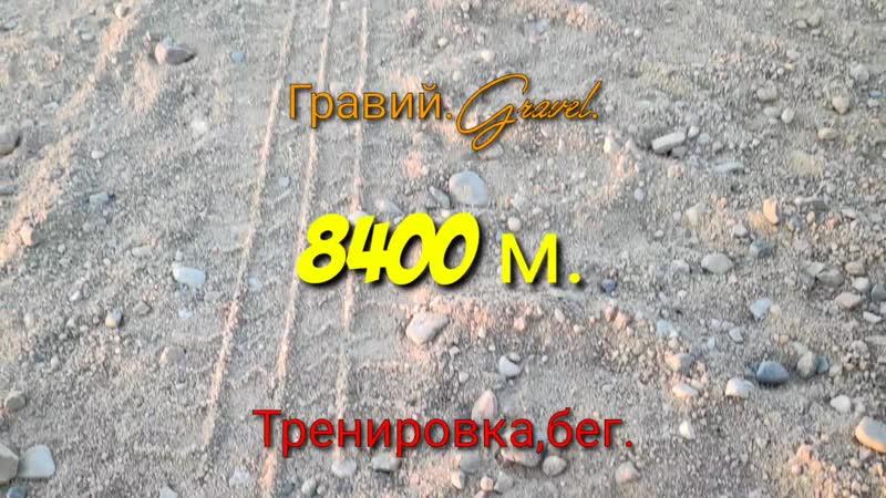 Американский бульдогТренировка,бег по гравию,American Bulldog Training, gravel run, 8,400 meters бульдогвдеревне